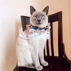 Feliz día internacional del Gato!  Con ustedes les presento a Nino, Felix y Polito, los jefes de nuestra familia. Quienes tenemos un gato (o más 🙀) sabemos de todas sus cualidades que los hacen inigualables ♥️ y estoy segura por aquí hay varias como yo, 😻 te animas a comentarme el nombre de tu gatito? . . . . . . #sofialapenta #estampasparalupa #animallover #catlover #fashion #internationalcatday🐱 #drawing  #diainternacionaldelgato #arte #sketchbook  #gatos #artwork #studio #visualsoflife…