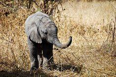 Tanzania photostory