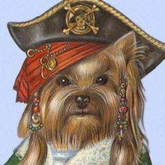 Yorkie Pirate ...
