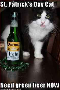 St. Patrick's Day Cat  Need green beer NOW