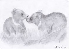 Bear cubs - Pencil drawing / Bärenjunge - Bleistiftzeichnung / Cuccioli d'orso - Disegno a matita #animals #cub #bear #bär #orso #art #pencildrawing #drawing #zeichnung #disegno Pencil Drawings, Cubs, Painting, Animals, Art, Good Photos, Photo Illustration, Children Drawing, Art Background