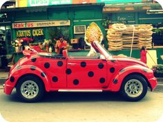 Since before I had my license, I have ALWAYS said that I want a ladybug volkswagen beetle - someway, somehow, someday, I WILL have one. :)