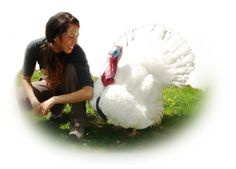 Gentle Thanksgiving is a program developed by Farm Animal Rights Movement (FARM) in 1990 to help prevent the raising and slaughter of the millions of turkeys who die each year for holiday dinners. Millions of caring folks across the U.S. are celebrating Thanksgiving with a rich selection of delicious vegetables, fruits, baked goods, and mock meats replacing the carcass on their dinner table.