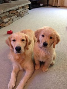 mum and daughter. Golden retrievers have the sweetest disposition!