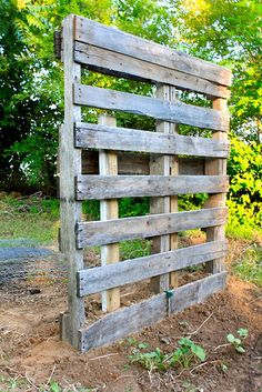 Pallet Trellis (for morning glories and moon flowers)