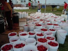 Mattituck strawberry festival, we went here many years as children and picked strawberries to our hearts content.....