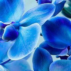 #floral #nose #fragrance #scent #parfum #perfume #floralscent #nowsmellthis #nofilter #eaudeparfum