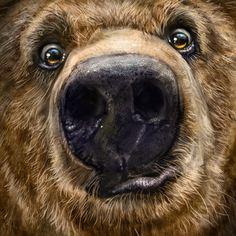 Trademark Fine Art 'Kodiak Closeup' Canvas Art by Patrick LaMontagne, Black Artist Canvas, Canvas Art, Baby Animals, Cute Animals, Family Tattoo Designs, Bear Clipart, Bear Pictures, Bear Art, Wildlife Art