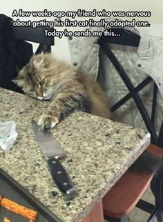 Cat acquires knife.  Darcy777 - lol