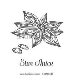 Image result for star anise illustration