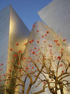 Coral tree in the Disney Concert Hall garden.