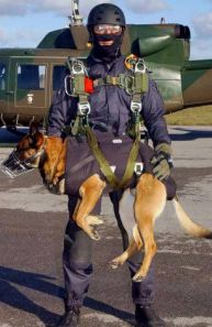 http://adinosauratemycrayon.wordpress.com/2012/06/15/military-dogs-the-other-elite-members/