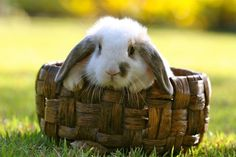 Happy Easter 2013 - 50 Cute Bunny Pictures  <3 <3