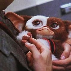 3 important rules when caring for a mogwai: No water, no food after midnight, and no bright light.