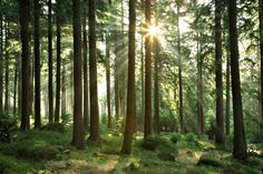 Organic Spa Magazine's Online Meditation Room | Forests Theme | Relax #OrganicSpaMagazine