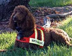 195 Best Search And Rescue Dogs Images Search Rescue Dogs Rescue Dogs Search Rescue