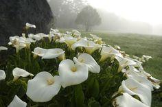 11 plantas que podrían ser tóxicas para tu mascota - Notas - La Bioguía