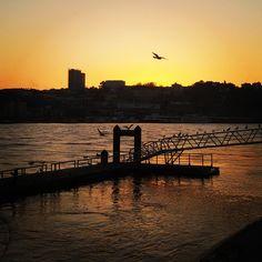 (Re)decisão de vida: morar em um lugar com gaivotas (Porto)