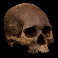 Dark Chocolate Skull now featured on Fab.