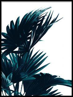 Palm leaves, poster i gruppen Plakater og posters / Størrelser / 30x40cm hos Desenio AB (8318)