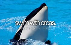 Swim with orcas