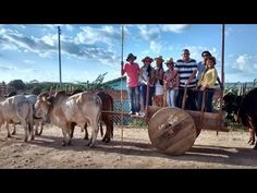 Festas de Carros de Boi: Os carros de boi cantaram no Encontro de Carreiros...