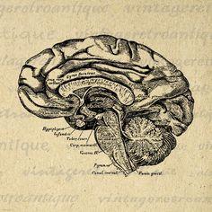 Printable Image Brain Cross Section Digital by VintageRetroAntique