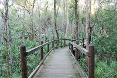 Stockyard Creek Circuit is an easy child and dog friendly bush walk through Brisbane Koala Bushland, suitable for all ages and abilities Dogs And Kids, Dog Friends, Garden Bridge, Brisbane, Circuit, Deck, Outdoor Structures, Camping, Places