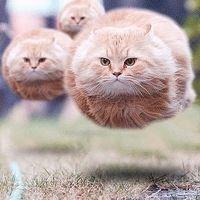 Kuvahaun tulos haulle smile cat