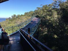 Elevated walkway through the trees in Kings Park Perth Western Australia