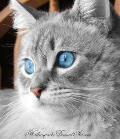 Pirate cat by h3llzcupcake.deviantart.com on @deviantART