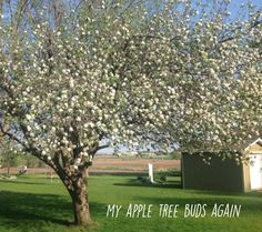 BE READY IN ANY SEASON Sunday School Curriculum, Spirit Soul, Apple Tree, Articles, Activities, Plants, Plant, Planets