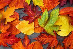 벽지 가을, 단풍, 잎, 다채로운, 나무
