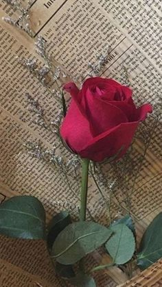 Women's Special: Four-Strategies Flowers Can Modify Your Working Day-To-Day Lifestyle Red Rose Wallpaper Tumblrs, Red Wallpaper, Flower Wallpaper, Morning Rose, Beautiful Rose Flowers, Beautiful Flowers Wallpapers, Book Flowers, Rose Pictures, Special Flowers