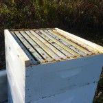 The Michigan Beekeepers Association's Beekeeping workshop glossary of many DIY projects Bee Hive Plans, Beekeeping For Beginners, Beekeeping Equipment, Raising Bees, Backyard Beekeeping, Bees Knees, Bee Keeping, Workshop, Bodies