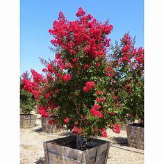 Blog Multi Vaso: Resedá - Flores Abundantes