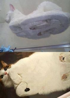 This is what a cat looks like from under a glass table.