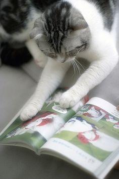 cat reading