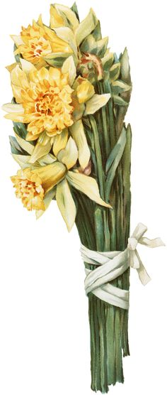 Vintage Daffodils Image - The Graphics Fairy