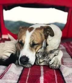 Dreaming about our upcoming mountain retreat Animals And Pets, Baby Animals, Funny Animals, Cute Animals, Amor Animal, Mundo Animal, I Love Cats, Cute Cats, Adventure Cat