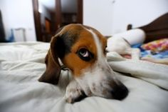 Get Rid of Dog Smells, Doggie Odors in Your House, Carpet, Furniture