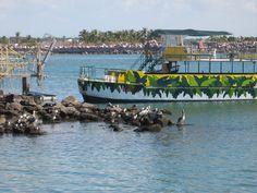 images of mazatlan mexico | Pelicans Jungle Boat Mazatlan Mexico