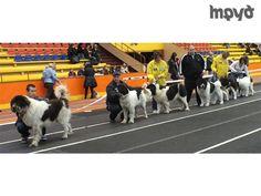Наше куче световен шампион - Състезанието е с ранг на кръг от Световната купа 2013 и се проведе в края на миналата седмица в Рига. В надпреварата участвали 10 държави с над 1500 кучета от 35 породи, съобщи председателят на Българският републикански киноложки съюз Аврам Петков.