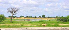 Guéli,  N'Djaména (Tchad)