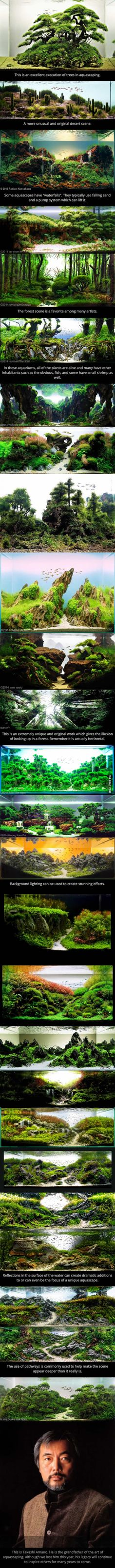 - Aquarium - These Are Aquariums. This Is The Art Of Aquascaping. This is just amazing . These are aquariums. This is the art of a aquascaping. Aquascaping, Aquarium Aquascape, Planted Aquarium, Aquarium Terrarium, Aquarium Landscape, Aquarium Fish, Aquarium Design, Paludarium, Vivarium