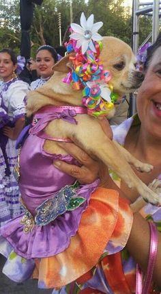 Fiesta Chihuahua