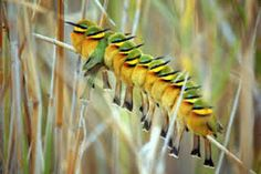 Visit to the Okavango Delta, Chobe National Park and Savuti with Expert Botswana! We aim to simplify planning a Botswana Safari holiday! Cute Funny Pics, Chobe National Park, Hope Is The Thing With Feathers, Safari Holidays, Bee Eater, Wildlife Safari, In And Out Movie, Colorful Birds, Exotic Birds