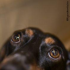 Those sweet eyes!