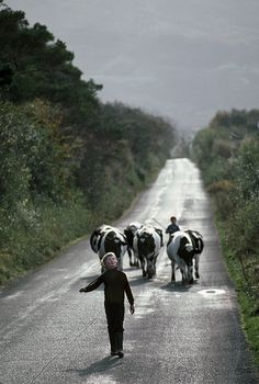 A country road near Castlebar, in County Mayo, Ireland , for travel photography story, (Thomas Ondrey/The Plain Dealer)   by pdbritchie