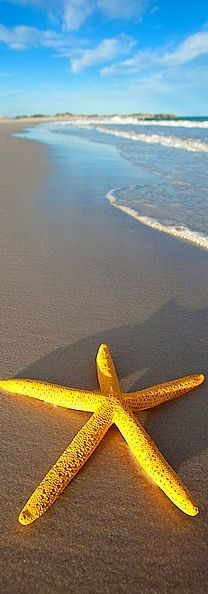 Yellow starfish!